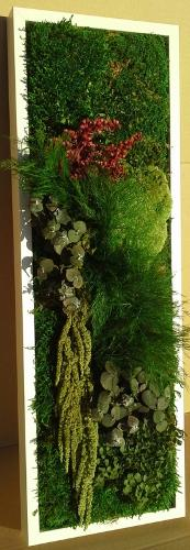 Cadre végétal stabilisé 20cm par 60cm