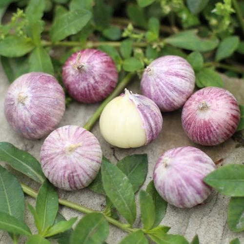 China farm fresh solo garlic