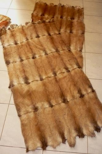 Muskrat belly fur plate 60x120 cm for cheap price