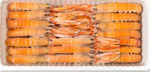Langoustines surgelées nephrops norvegicus