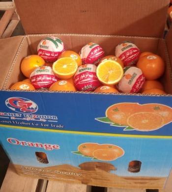 Египетский пупок апельсин