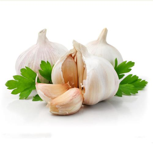 Wholesale pure white garlic for the international market