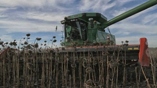 Bec cueilleur pour la récolte du tournesol