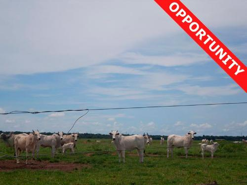 Farmland for sale in Mato Grosso Brasil