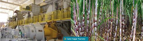 Cane Sugar Factory