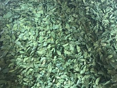 Bay leaf machine dried
