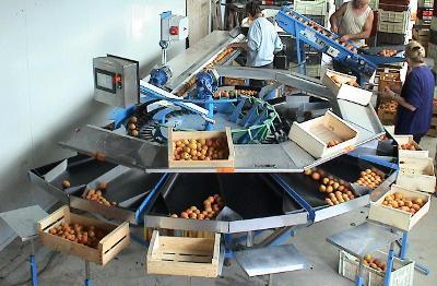 Calibreuses pour Abricot, Prune, Kiwi