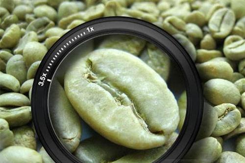 Café Verde em Grãos