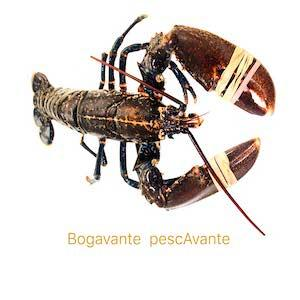 bogavante marisco gallego pescavante