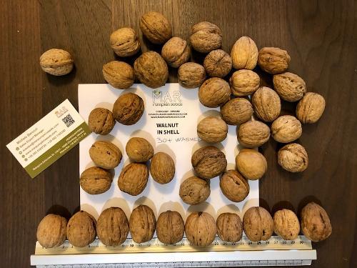Walnuss - walnut in shell