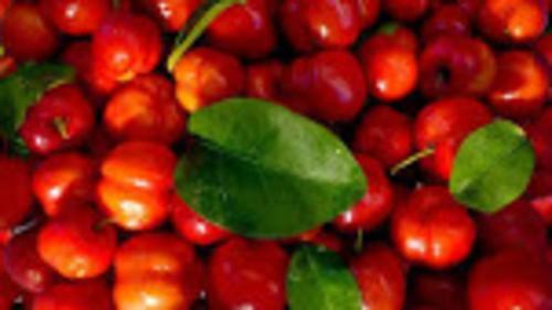 Bio Acerola Extrakte 17% Nat. Vitamin C