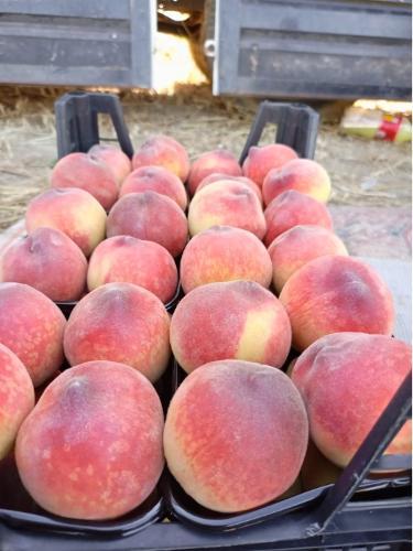Персик свежий,Турция
