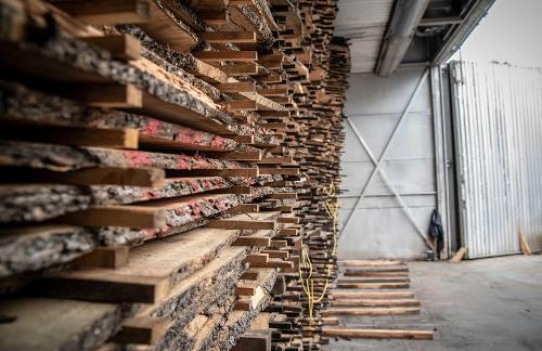 Segagione legno d'ulivo