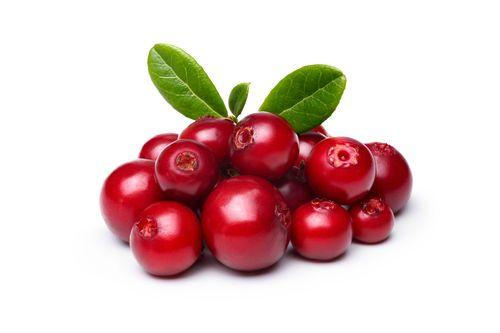 LINGONBERRY JUICE CONCENTRATE