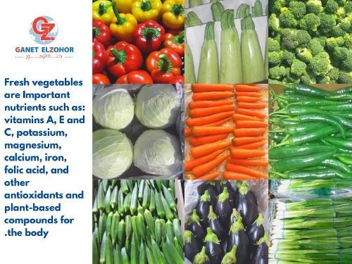 Verduras egipcias