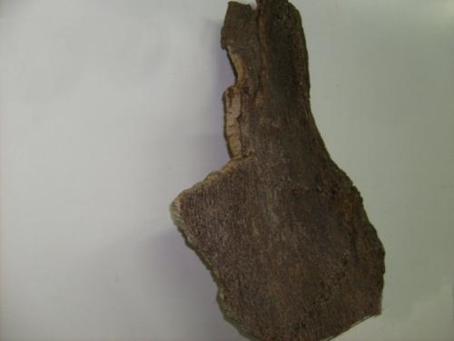 Corteccia di sughero