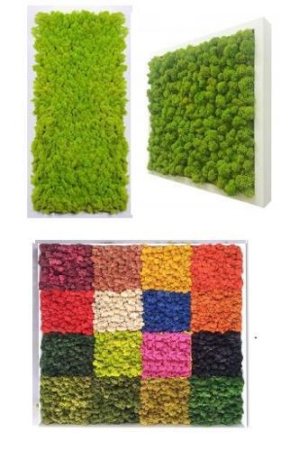 Preserved moss frame