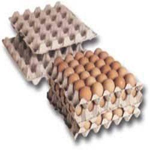 Alveolo a Huevos en celulosa moldeados