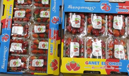 Fresas egipcias