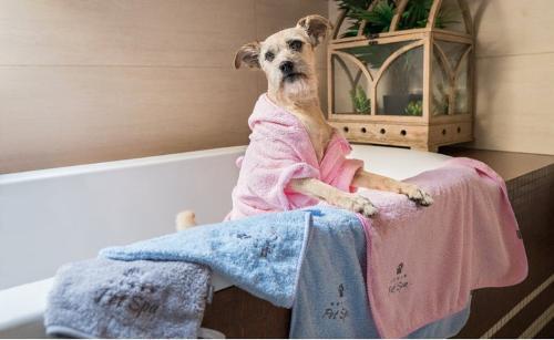 Ошейники, поводки, шлейки- все для собак
