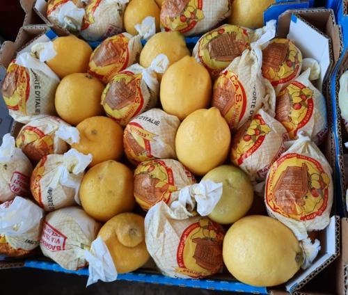 Lemons Primofiore