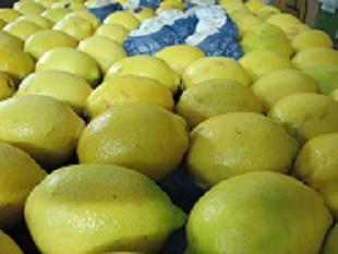 Лимоны ЮАР, Апельсины ЮАР, Мандарины ЮАР, Грейпфрут ЮАР