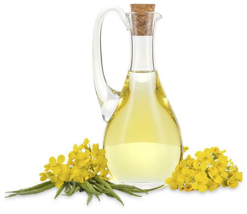 Refined Rapeseed Oil / Canola Oil