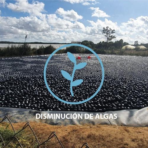 Control de algas