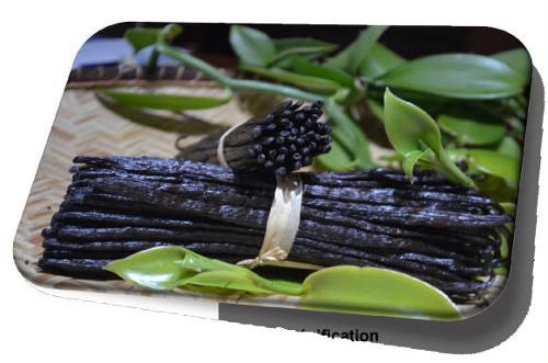 Black Tk Vanilla Grade A