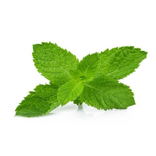 Lemon balm ... leaves with healing properties