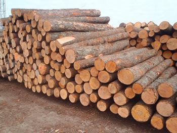 Fresh Cut European Sawn Logs