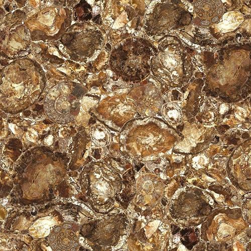 Brown Petrified Wood