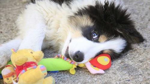 Educación de cachorros