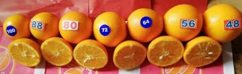 Orange égyptienne