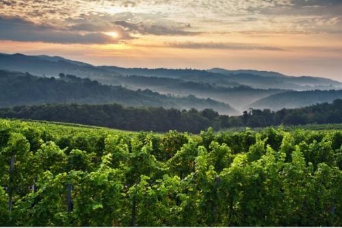 Tourism in vinyard cottages